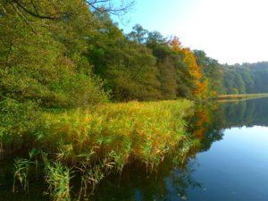 jezioro trzesniowskie - zanim opadna liscie 4